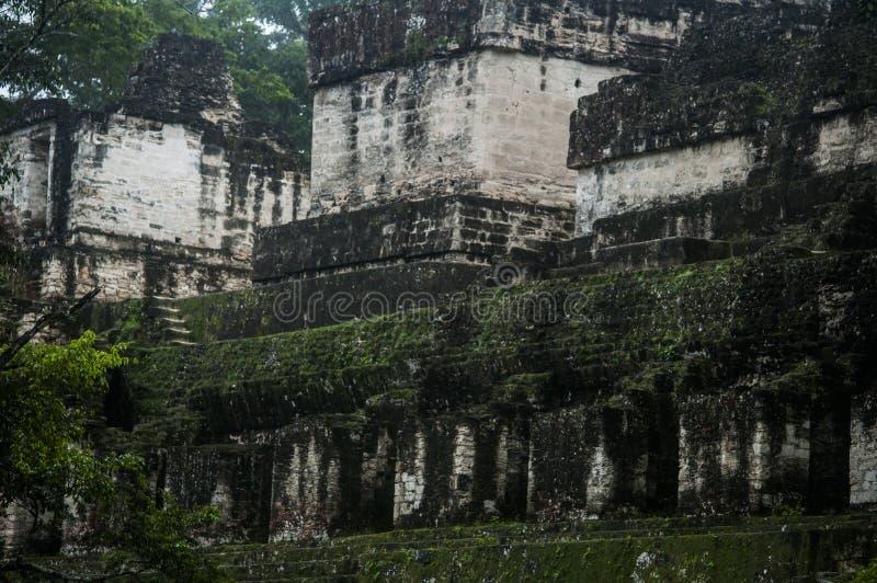 蒂卡尔国家公园,危地马拉 库存照片