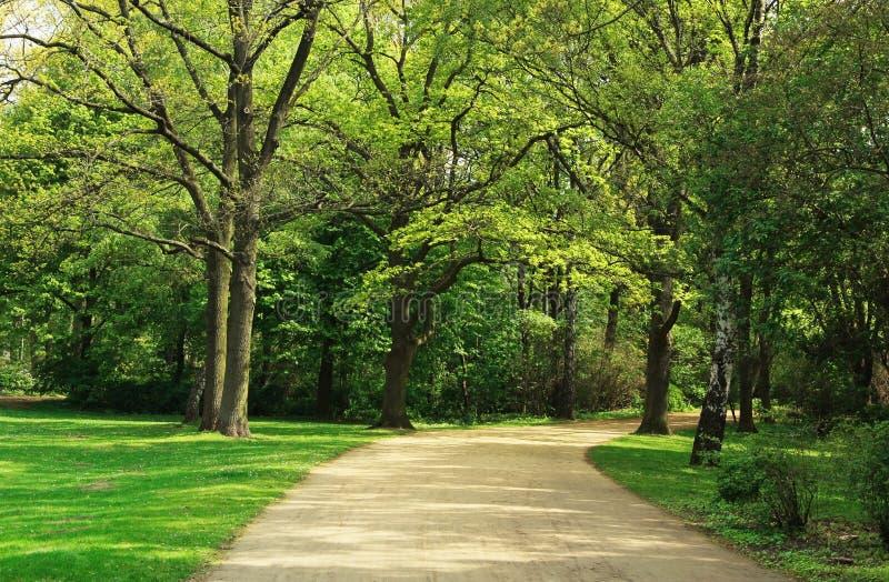 蒂尔加滕公园在柏林 库存图片