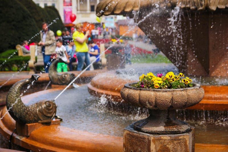 蒂米什瓦拉-在一个石花盆的蝴蝶花在有人的鱼喷泉在背景中的享受他们的步行 免版税库存照片