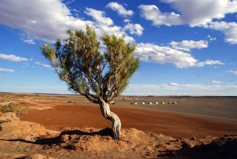 蒙古结构树 免版税图库摄影