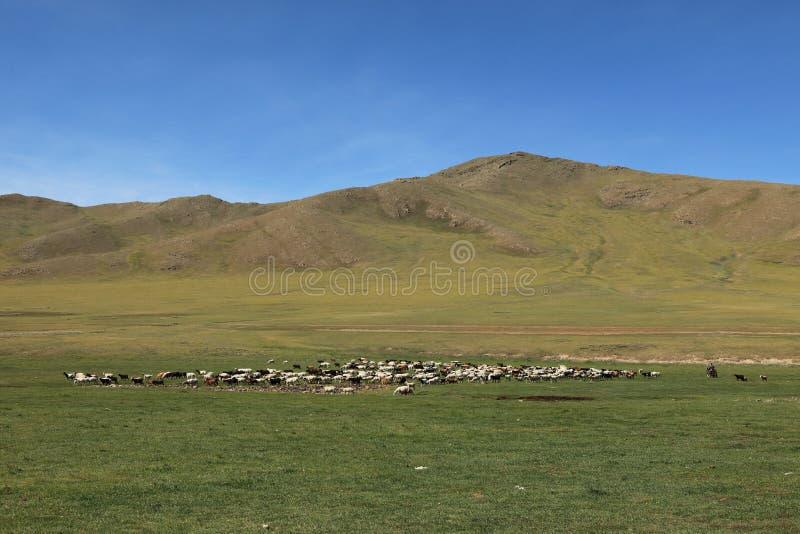 蒙古风景和自然 库存照片