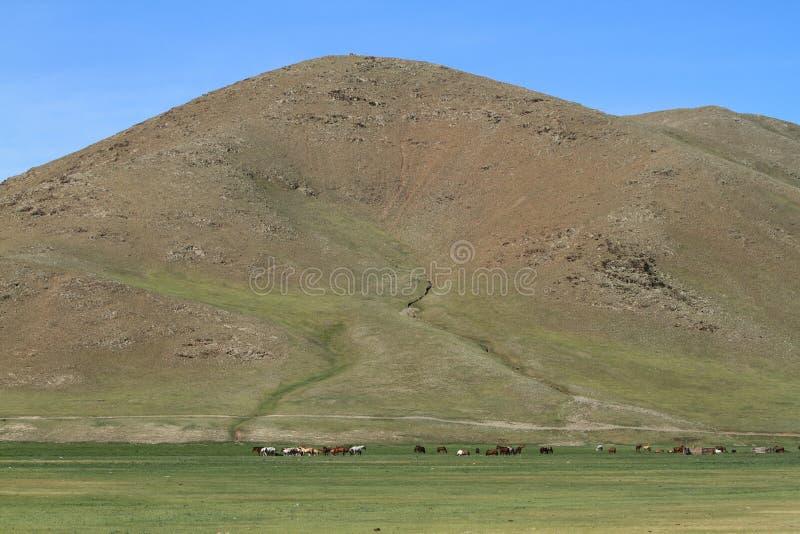 蒙古风景和自然 免版税库存图片