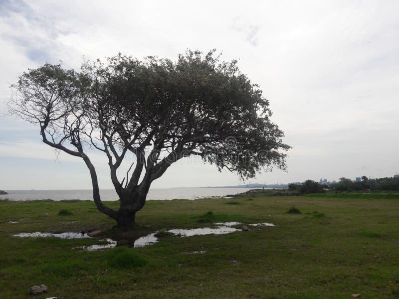 蒙得维的亚乌拉圭树和海洋 库存照片