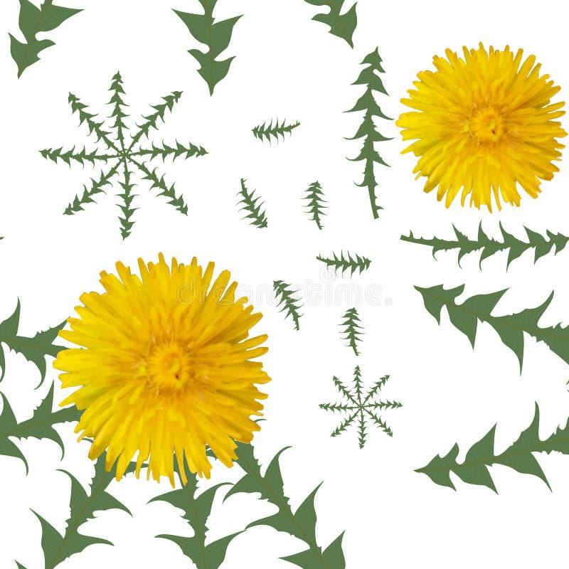 蒲公英开花与在白色背景的绿色叶子 模式无缝的向量 皇族释放例证