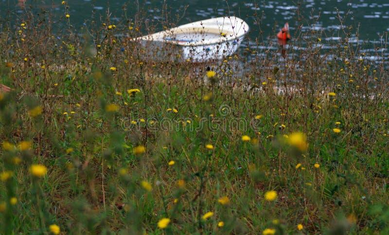 蒲公英沼地与一条小船的在defocus的背景中 图库摄影