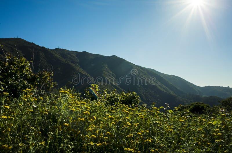 蒲公英的领域在加利福尼亚前面小山的  图库摄影