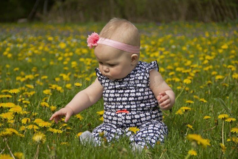 蒲公英的婴孩 免版税库存照片