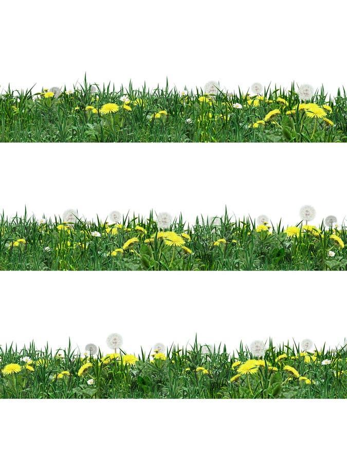 蒲公英花和绿草 库存例证