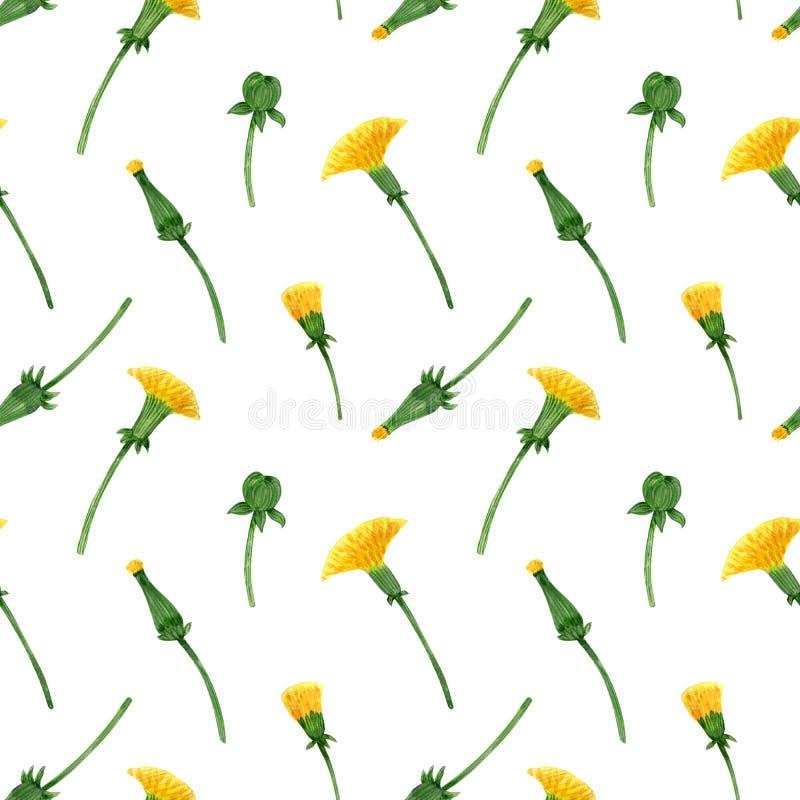 蒲公英芽和开花的水彩无缝的样式 库存例证