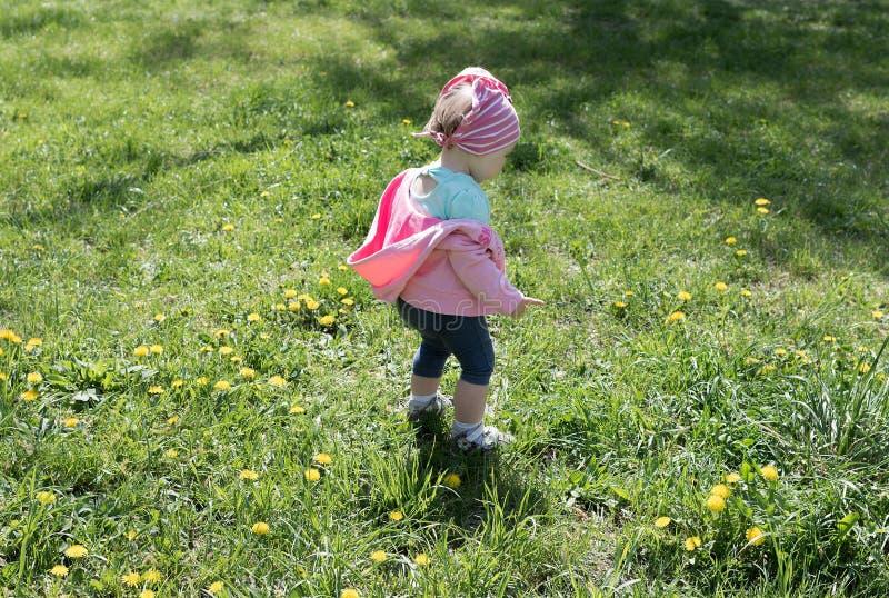 蒲公英草坪的小女孩 免版税图库摄影