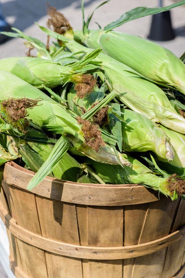 蒲式耳新鲜的玉米穗 库存照片