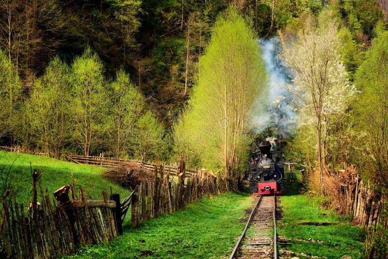 蒸火车在Vaser谷, Maramures,罗马尼亚的名为Mocanita 在春天 免版税库存照片