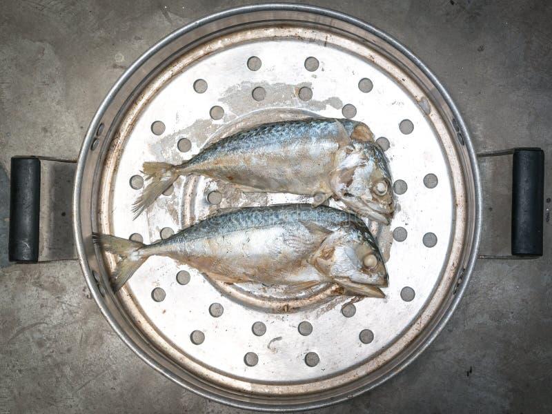 Download 蒸的鲭鱼 库存图片. 图片 包括有 海鲜, 捷克人, 火轮, 海运, 横向, 空白, 本质, 新鲜, 敌意 - 59112643