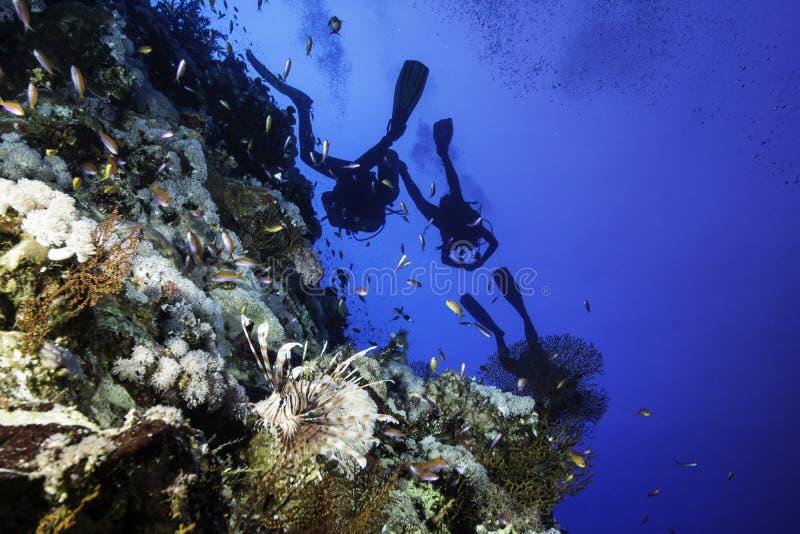 蓑鱼和轻潜水员Elphinstone的 库存图片