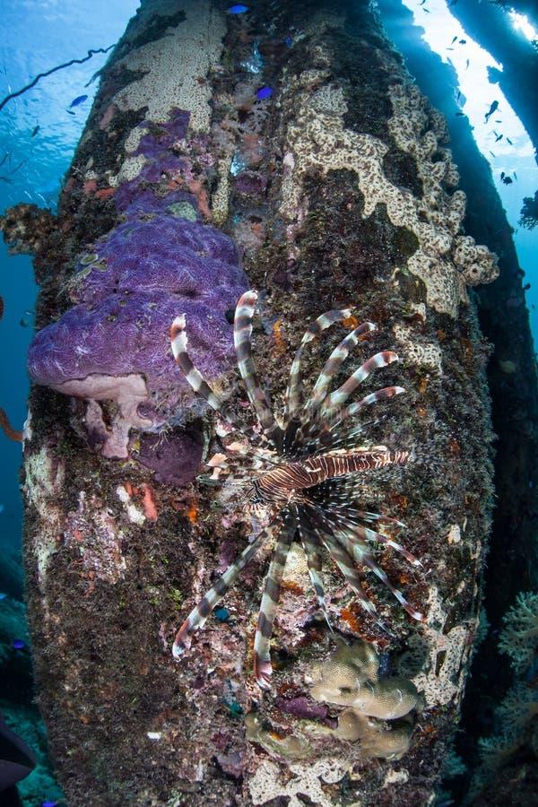 蓑鱼2 库存照片