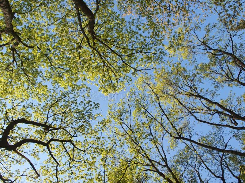 蓝天上的树 库存照片