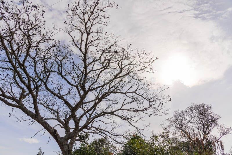 蓝天下热带树的轮廓 图库摄影