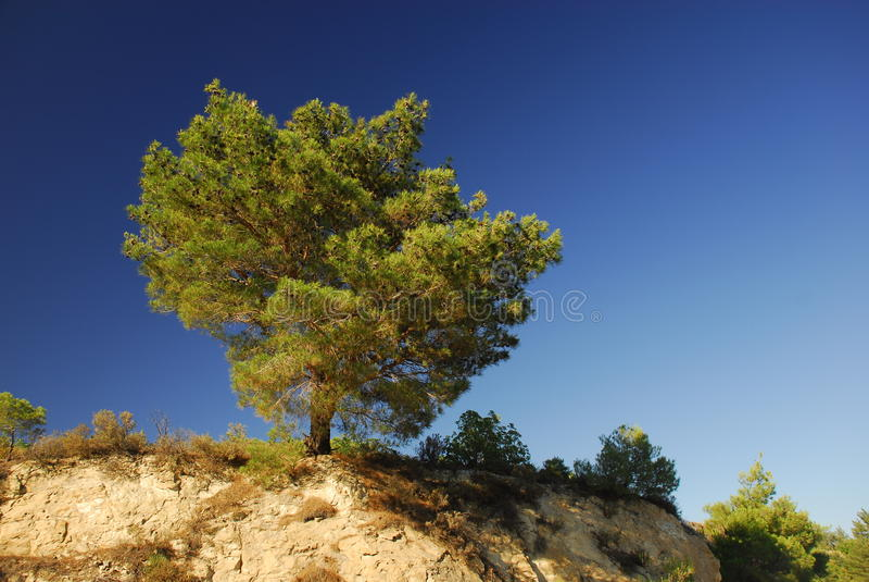 蓝天严格的结构树 免版税库存图片