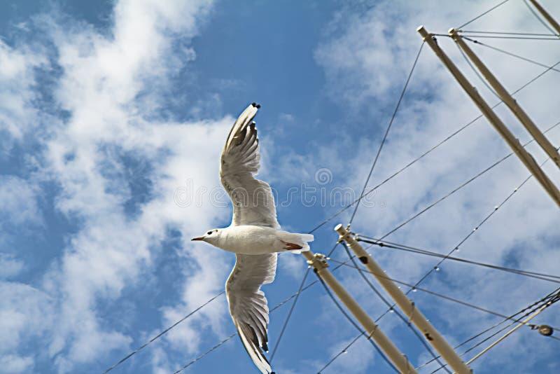 蓝天前掠过桅帆的海鸥 库存照片