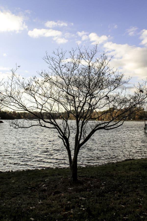 蓝天在离湖岸的附近 图库摄影