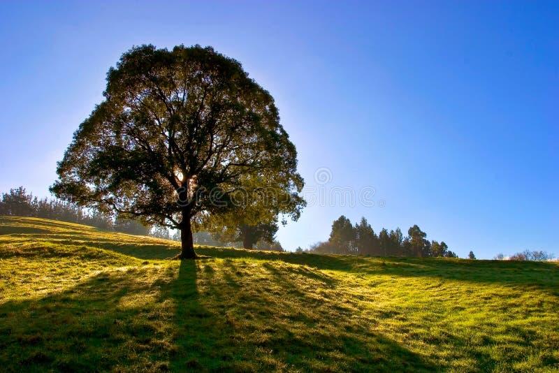 蓝天孤零零结构树 免版税库存照片