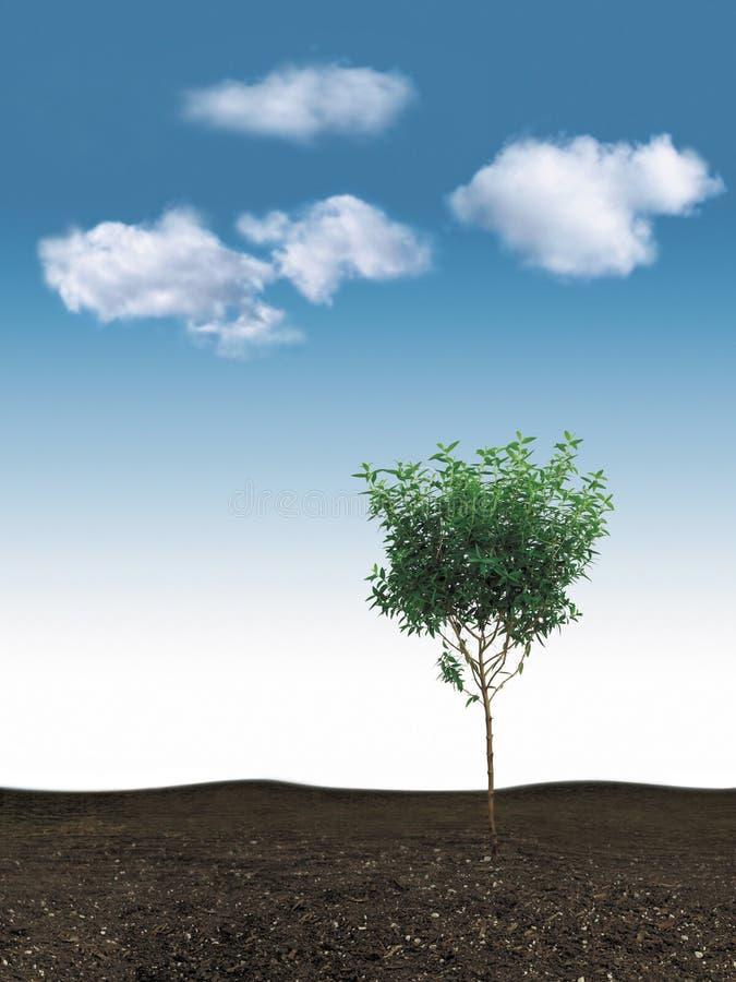 蓝天小的结构树 免版税库存照片