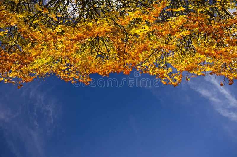 蓝天的五颜六色的秋天树梢 免版税库存图片