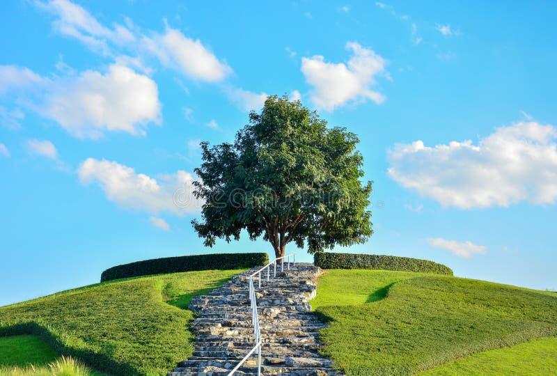 蓝天背景绿草山顶上的石梯独树 免版税库存图片