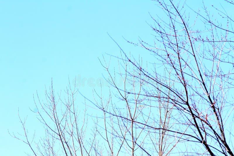 蓝天视图低谷树型视图 免版税库存照片