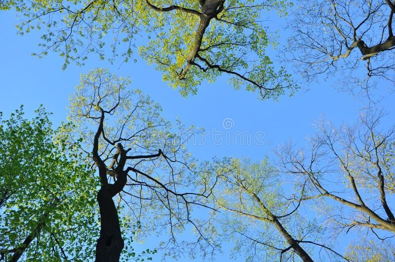 蓝天,云彩,树Â分支,距离,春天,希望,希望 库存照片