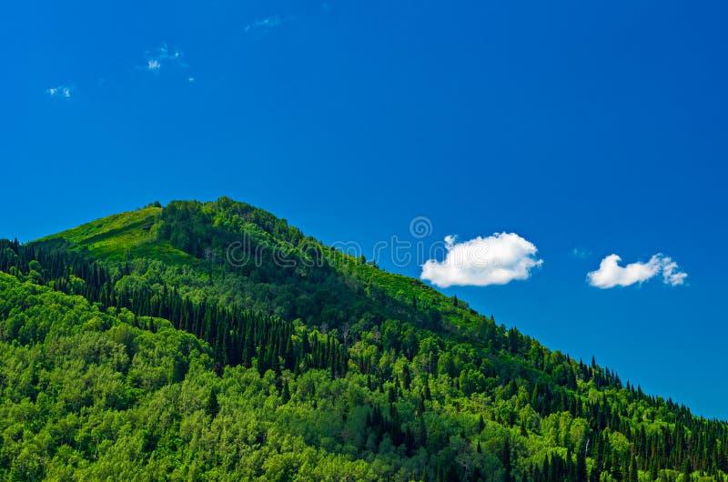 蓝天,白色云彩,绿色阿尔泰山在中午 库存照片