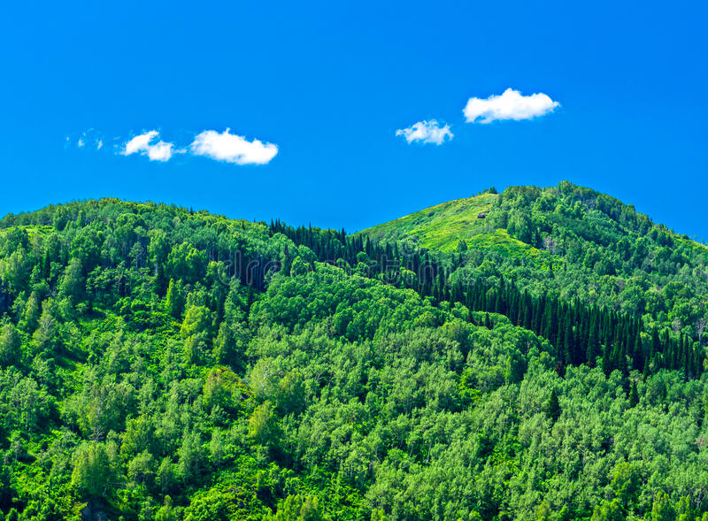 蓝天,白色云彩,绿色阿尔泰山在中午 免版税库存图片