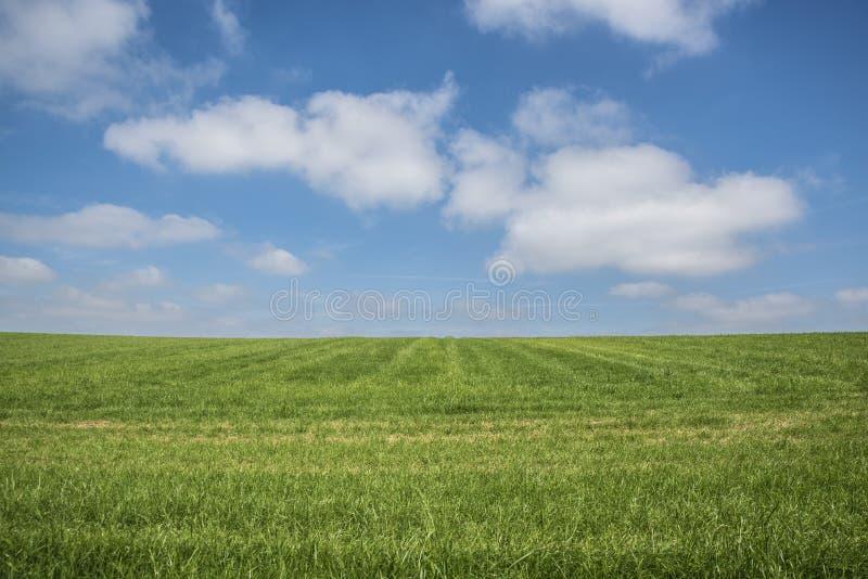 蓝天,绿草,白色云彩 免版税库存图片