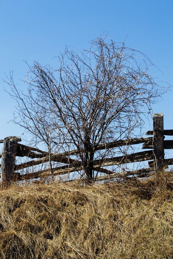 蓝天晴朗的春日木篱芭唯一树 免版税库存照片