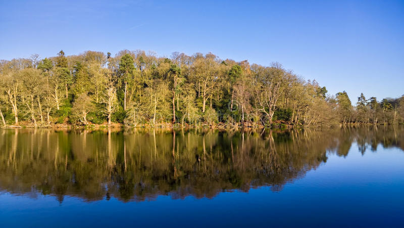 蓝天Woodland湖反射 免版税库存照片