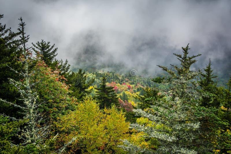 蓝岭山脉的有雾的看法从祖父山的 免版税库存照片