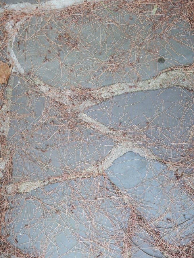 蓝旗信号有疏散杉木针的石头道路 免版税库存照片