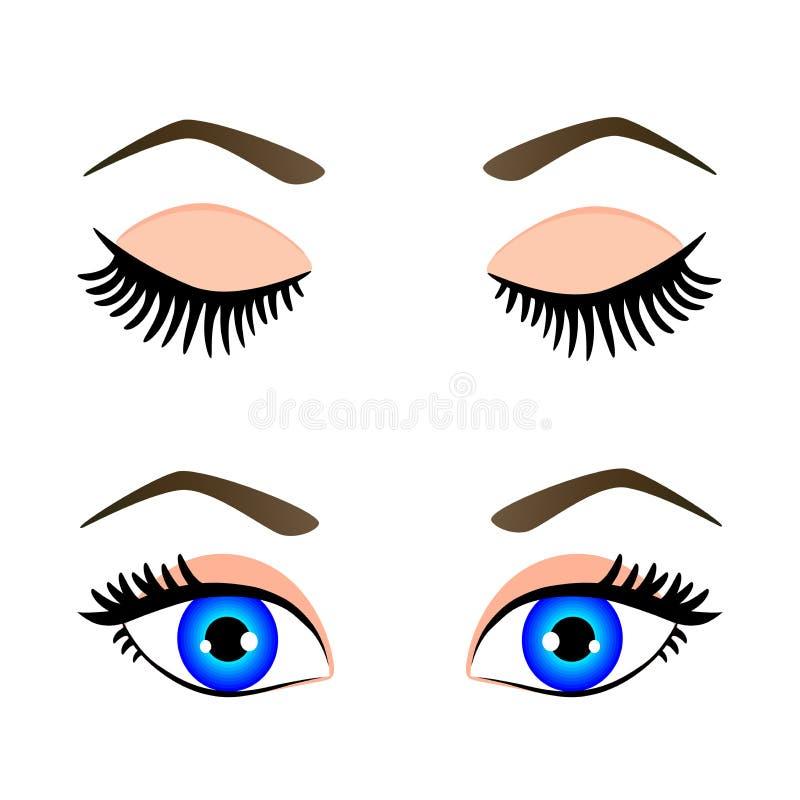 蓝眼睛和眼眉剪影  库存例证
