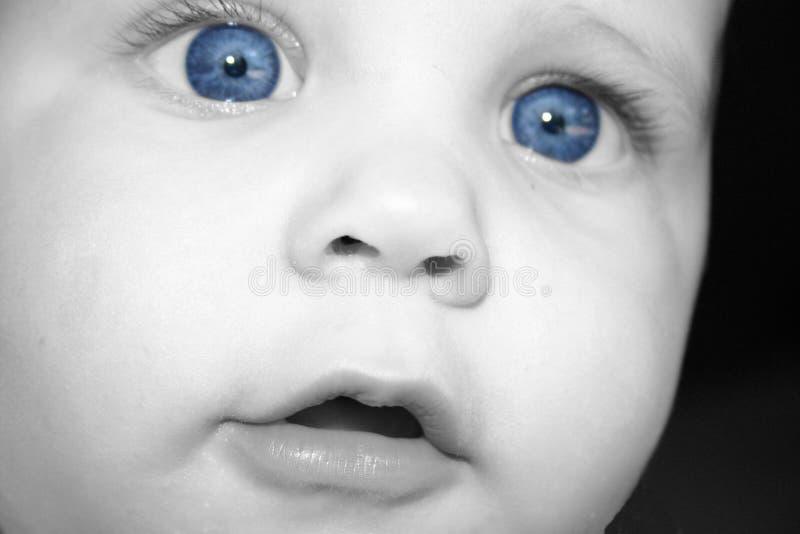 蓝眼睛的奇迹 免版税图库摄影