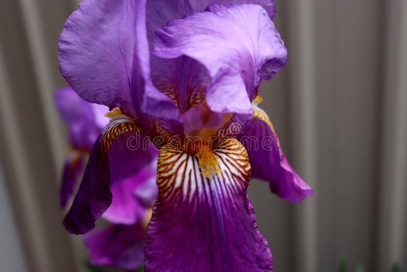 蓝紫色 免版税库存图片
