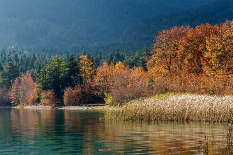 蓝色、干净,山湖Doxa和树的看法与黄色叶子希腊,区域科林西亚州,秋天的伯罗奔尼撒的, 库存照片