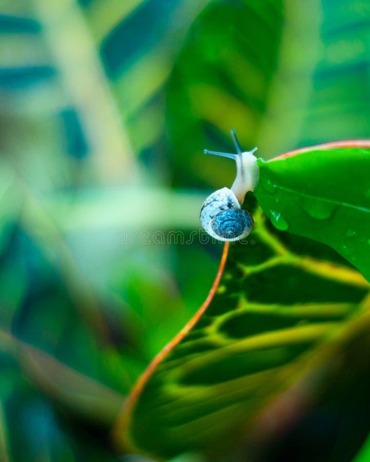 蓝色一蜗牛 库存照片