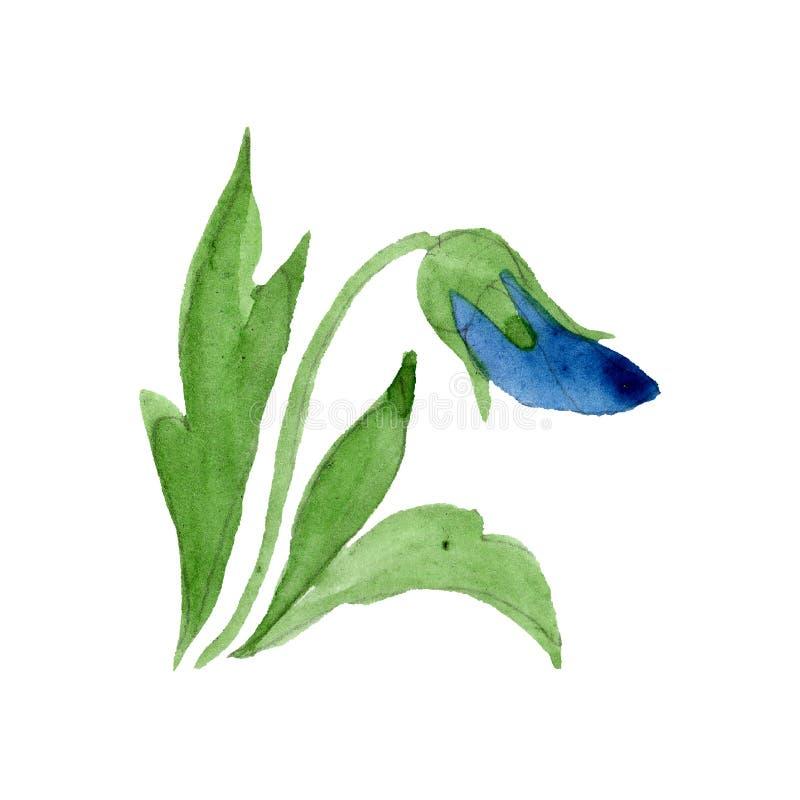 蓝色中提琴花卉植物的花 水彩背景例证集合 被隔绝的蝴蝶花例证元素 向量例证