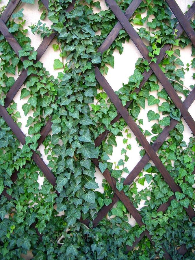 蓝色云彩绿色常春藤留下天空墙壁 库存图片