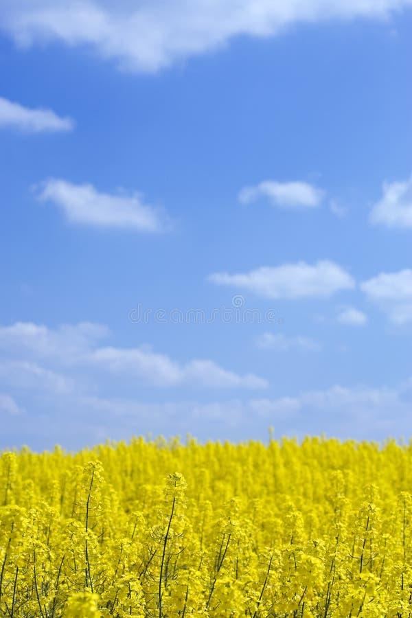 蓝色云彩调遣蓬松强奸天空 免版税图库摄影