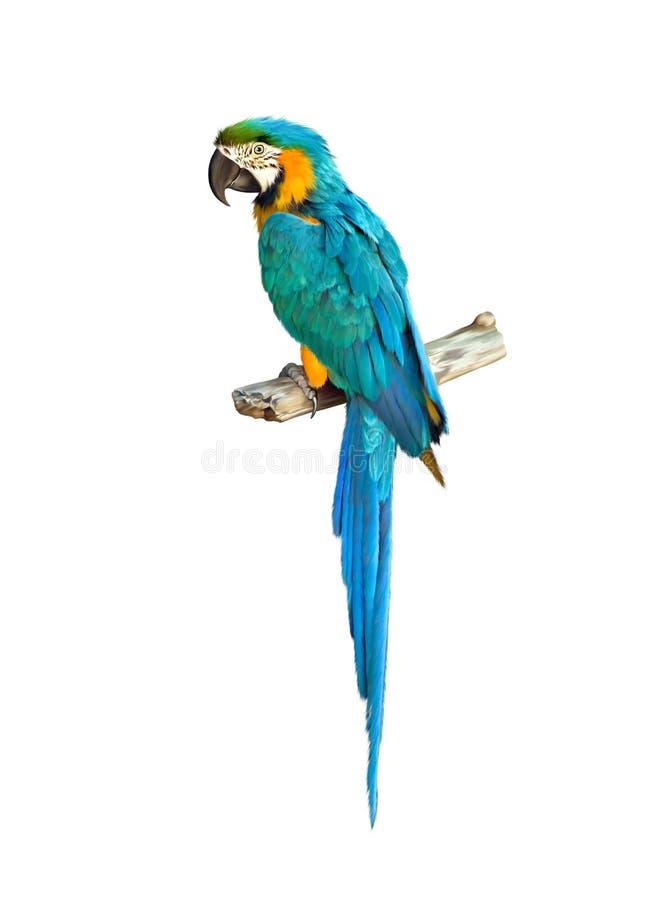 蓝色五颜六色的金刚鹦鹉鹦鹉 库存例证