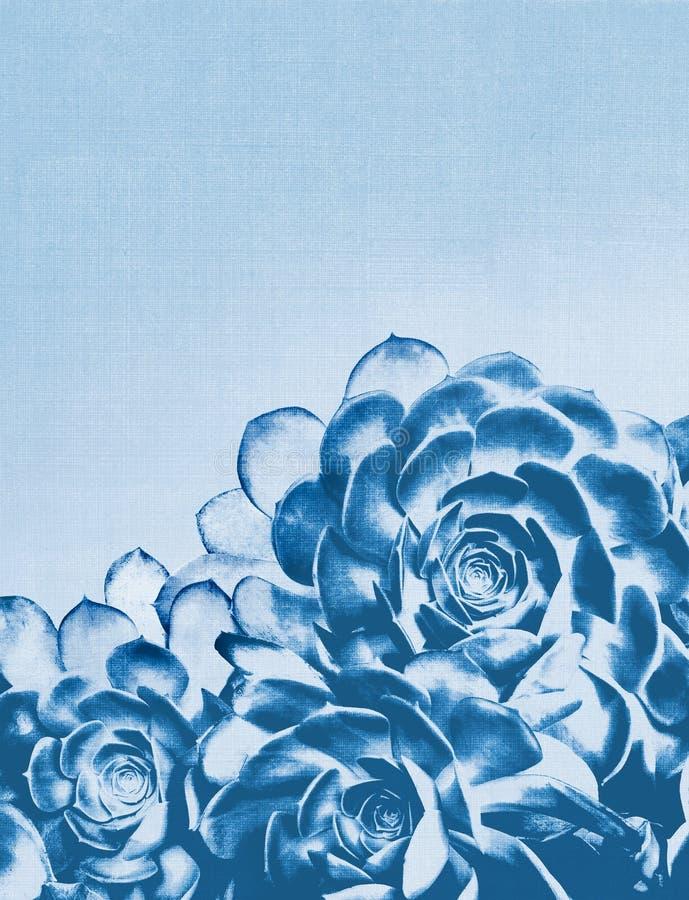 蓝色仙人掌多汁植物 免版税库存图片