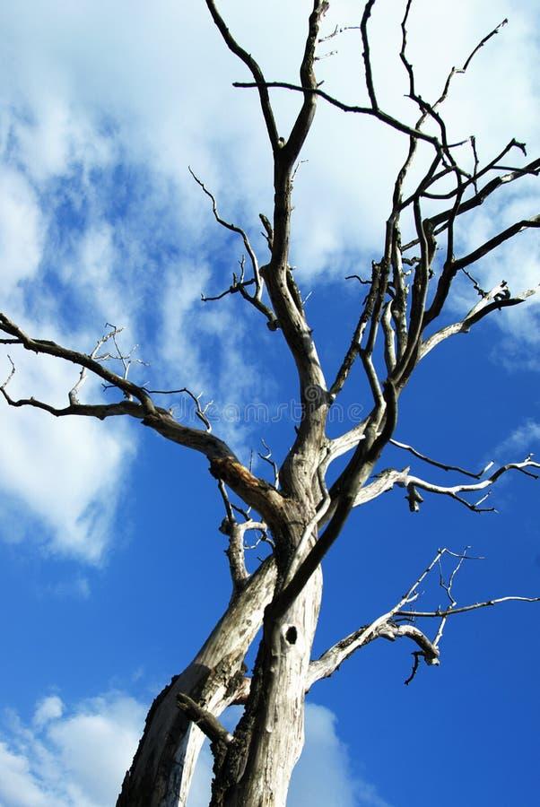 蓝色停止的天空木头 图库摄影