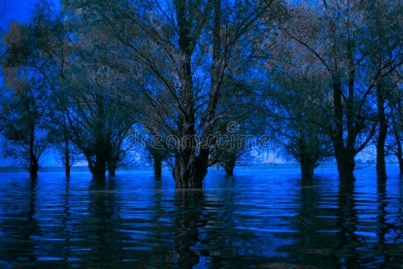 蓝色冷蠕动的多瑙河Delta充斥了森林 库存照片