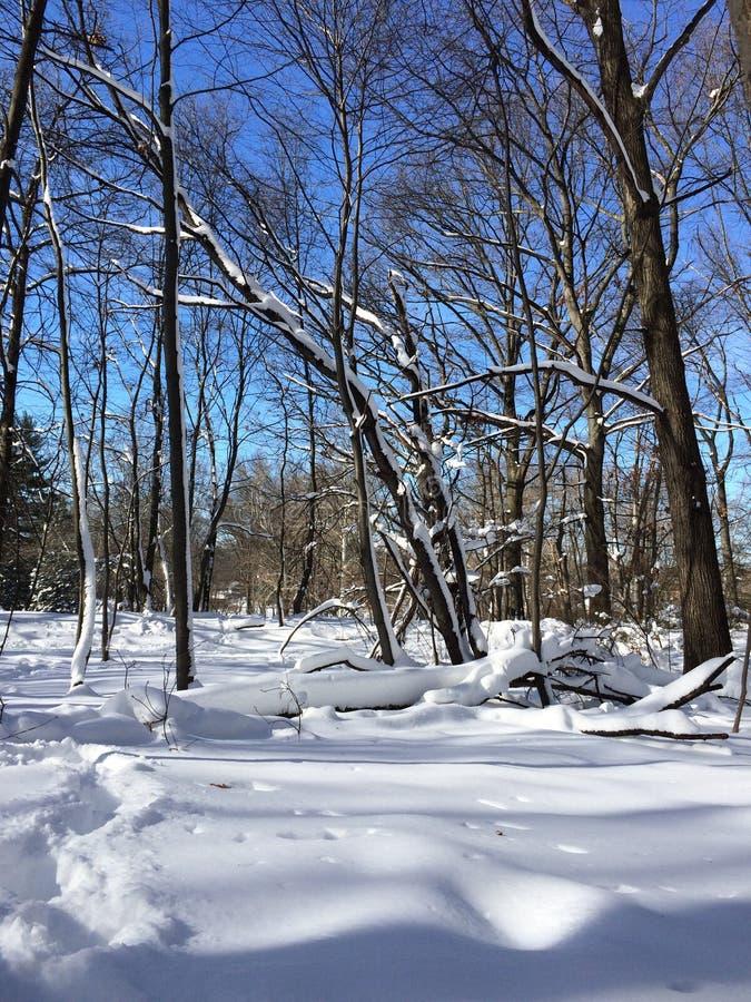 蓝色分行休息日霜谎言天空雪结构树冬天 图库摄影